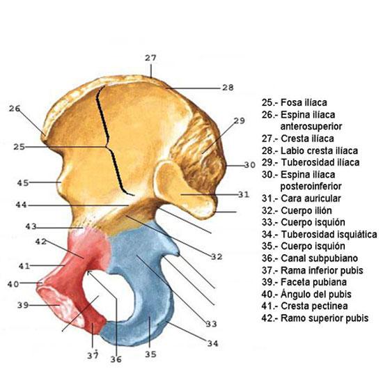 QUIROBODY.COM Quiromasaje-Terapias Manuales-Salud